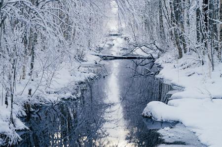 dreamlike: Small water channel in dreamlike snowy forest by winter morning Stock Photo