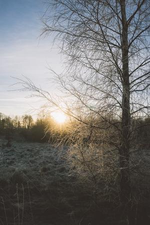 vertical composition: Frozen birch tree against setting sun, vertical composition Stock Photo