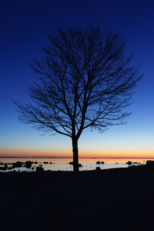 Alone tree silhouette by night on the sea coast