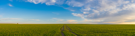 Tire tracks leaved on a springtime field in sunset light. Rural agriculture panorama
