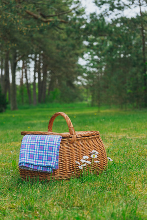 checker: Picnic basket and blue white checkered napkin on lawn with daisy flowers. Vertical view. Weekend break concept