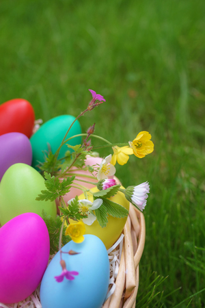 Colorful eggs with springtime flowers in basket on green grass. Happy easter background