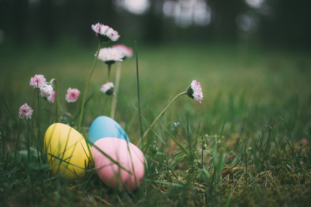 Colorful eggs on grass with daisy flowers. Happy easter background. Selective focus, shallow depth of field