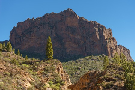 Pine tree against large rock formation by sunny day