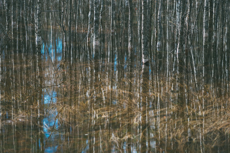 Bare trees reflection in water, early springtime background
