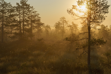 Beautiful foggy and sunny morning in bog area, golden hour