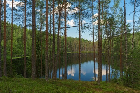 Lake view through trees of deep coniferous forest, nordic landscape