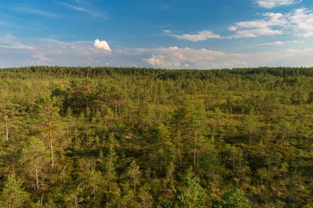 Viru bog summer landscape, Lahemaa national park, Estonia