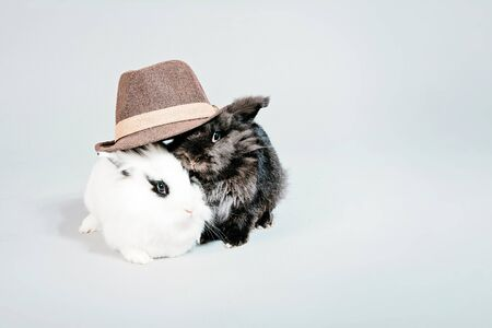 Two cute fluffy rabbits wearing a hat isolated on a white background . High quality photo
