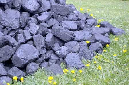pieces of coal to the floral meadow photo