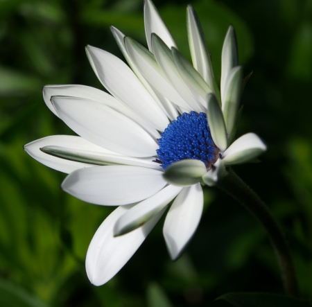 This is a white flower.