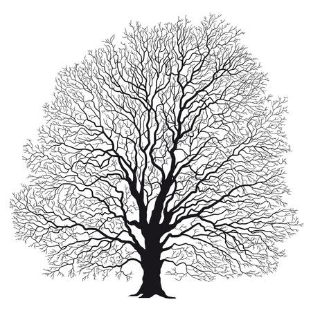 oak tree silhouette: tree silhouette black