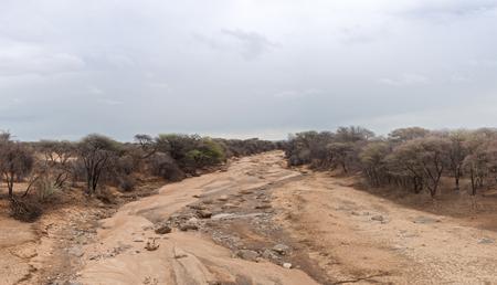 dampness: Ugab River in the small rainy season near Outjo