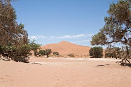 vlei: Dead Vlei is located near Sossusvlei in the Namib Naukluft National Park, Namibia