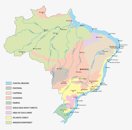 vegetation: vegetation map of Brazil Illustration