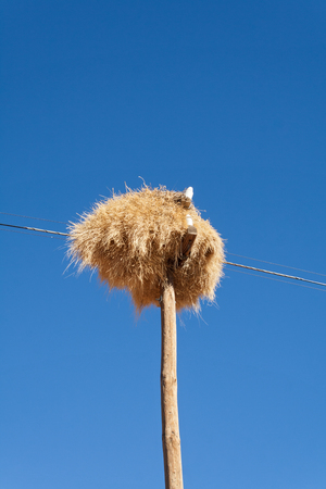 sociable: Weaver bird nest on an old Utility pole on the roadside in Namibia Stock Photo