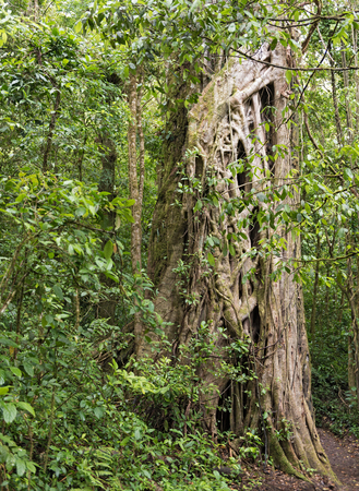 plants and trees: Trees and plants in the Monteverde Cloud Forest Reserve, Costa Rica Stock Photo