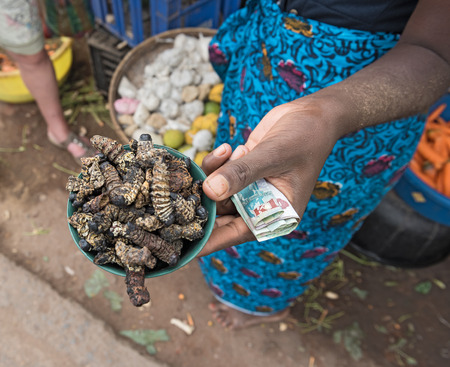 Small bowl of roasted mopane caterpillar, gonimbrasia belina at the market in Livingstone, Zambia