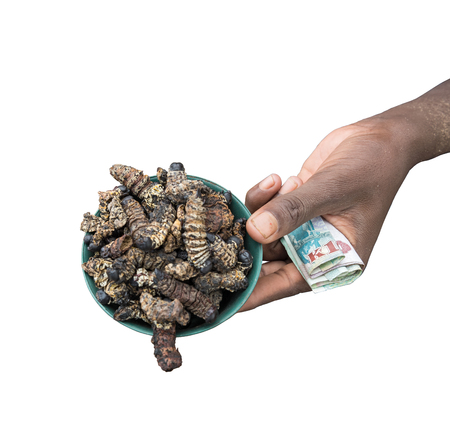 Caterpillars, Gonimbrasia belina at the market in Livingstone, Zambia