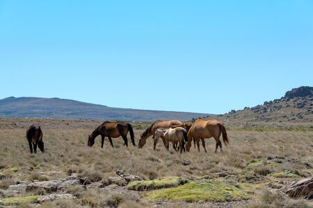 Landscape pictures with horses in Patagonia, Argentina 2