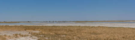 the sua salt pan in the Makgadikgadi region, Botswana