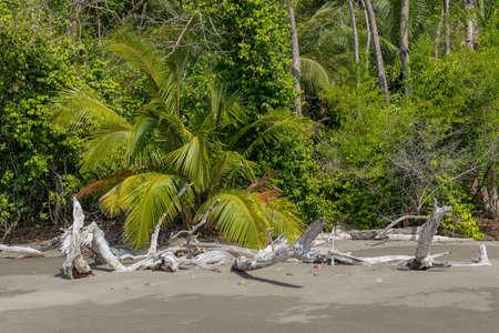 tropical beach on the cebaco island, panama Foto de archivo