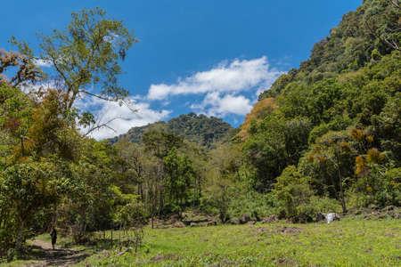 tropical cloud forest in Baru Volcano National Park, Panama Foto de archivo