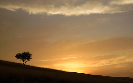 Black silhouette of lonely single tree standing on slope ground during sunset. Background of yellow orange sky with clouds. Black tree shadow in the evening
