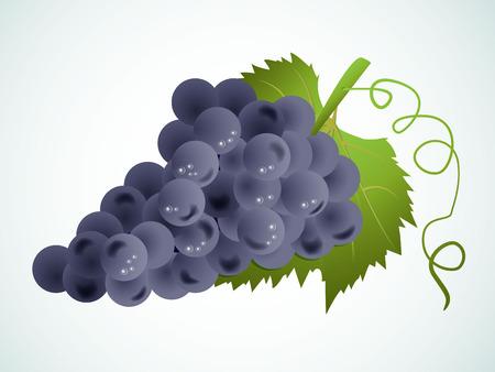 viticulture: vector grapes
