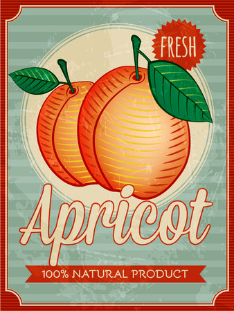apricot: vector vintage styled apricot poster