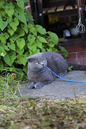 twee: Scottish fold kitten