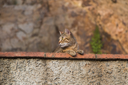 witty: Funny cat observed environment from a stone wall.