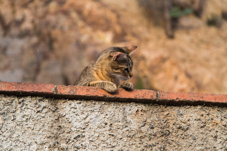 twee: Funny cat observed environment from a stone wall.
