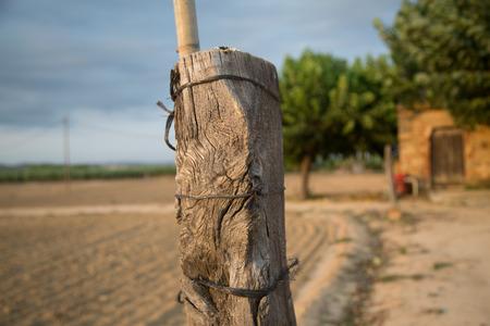 farm field: Wood column on the farm field.