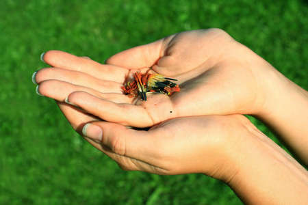 A photo of hands holding flower seeds