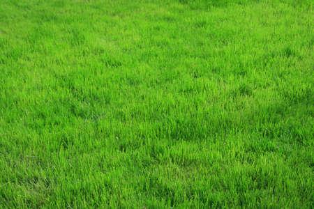 A photo of green grass field (only grass)