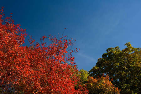 Bright autumn colors trees over sky background