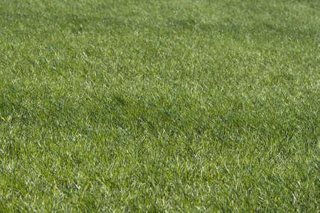 Green grass backgrounf Stock Photo