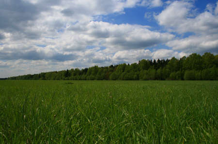 Landscape - Forest and a meadow Stock Photo