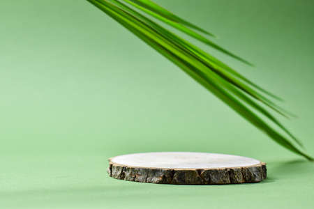 Podium for product presentation. A minimalistic scene of a felled tree lies against a green background. Prerequisites for branding.
