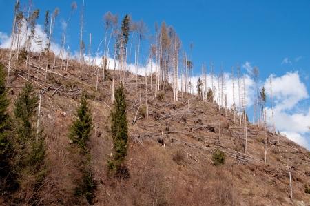 broken hill: Tree destruction by hurricane