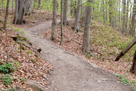 beechwood: Hiking trail through a beechwood forest Stock Photo