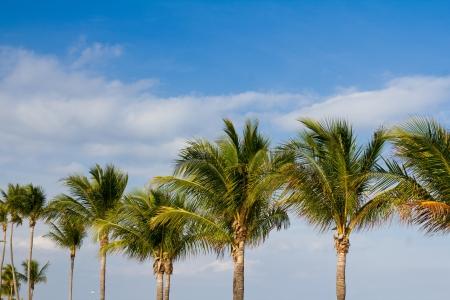 Row of palm trees Stock Photo