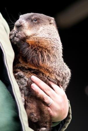 Cute groundhog