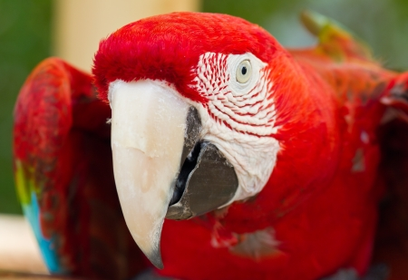 Colorful macaw parrot