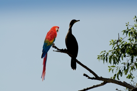 Contrasting bird pair photo