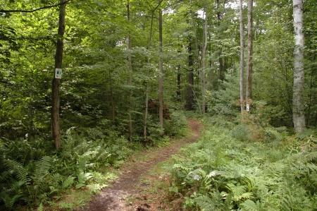 muskoka: Hiking Trail Stock Photo