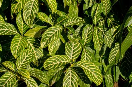 Leaf pattern   background   texture