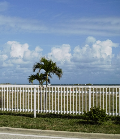 White picket fence and palm trees