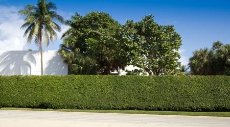 Palmbomen en een haag